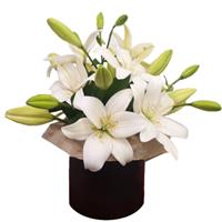 Box of 5 branches of lily