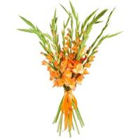 A wonderful bouquet of 11 orange gladiolus