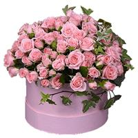 25 pink bush roses in a box