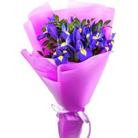 Bouquet of 15 purple iris