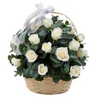 Basket of 35 white roses
