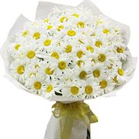 Chamomile, a bouquet of 51 pcs.