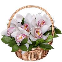 Orchid in the original basket