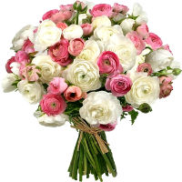 Bouquet of pink and white ranunkulyus