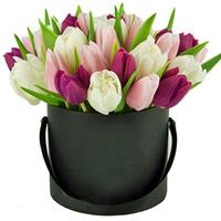 Tulips in a Box