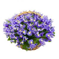 Basket of 101 iris
