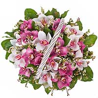 Bouquet of pink and white orchids