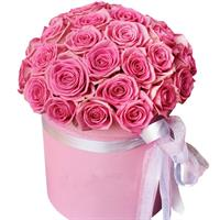shrub roses in a hatbox