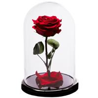 Red rose in a flask