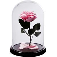 Pink rose in a flask