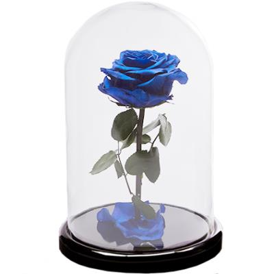 Blue rose in a flask